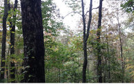 2.9ac Azalea Lane Blue Ridge GA, 30513