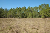 Greengrove Bv, Lot 12 Clermont FL, 34711