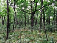 39 Acres  Cave Of The Mounds Rd Rd Blue Mounds WI, 53517