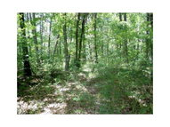 Lot 48 Willow Ln Pineville MO, 64856