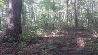 7 Ac. Wolf Branch Lane Crawford TN, 38554