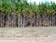 2 Acres Maryland Lane Corapeake NC, 27926
