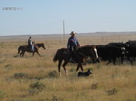 0 County Road 390 Grover CO, 80729